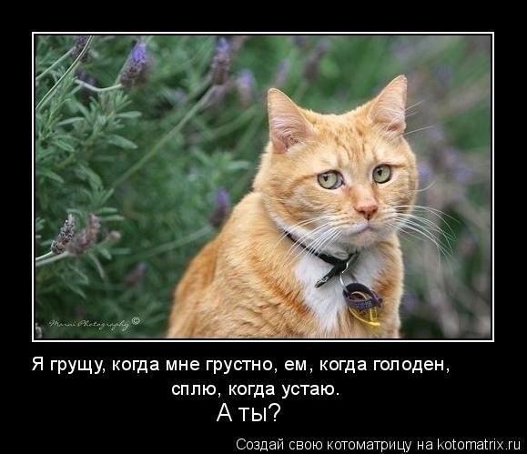 Котоматрица: Я грущу, когда мне грустно, ем, когда голоден,  сплю, когда устаю.  А ты?