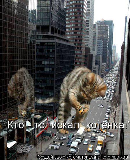 Котоматрица: Кто - то  искал  котёнка!?