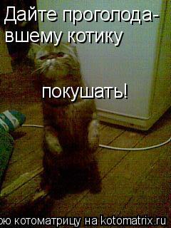 Котоматрица: Дайте проголода- вшему котику покушать!