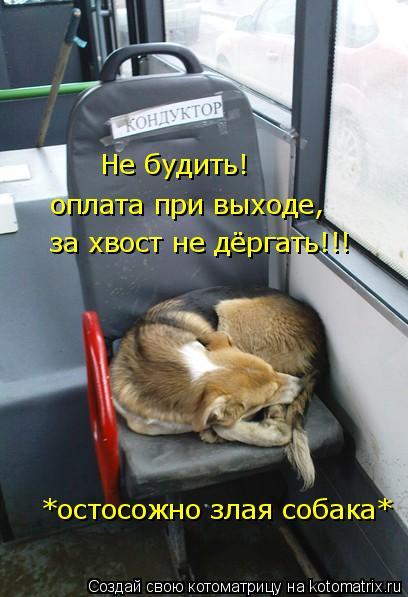 Котоматрица: Не будить! оплата при выходе, за хвост не дёргать!!! *остосожно злая собака*