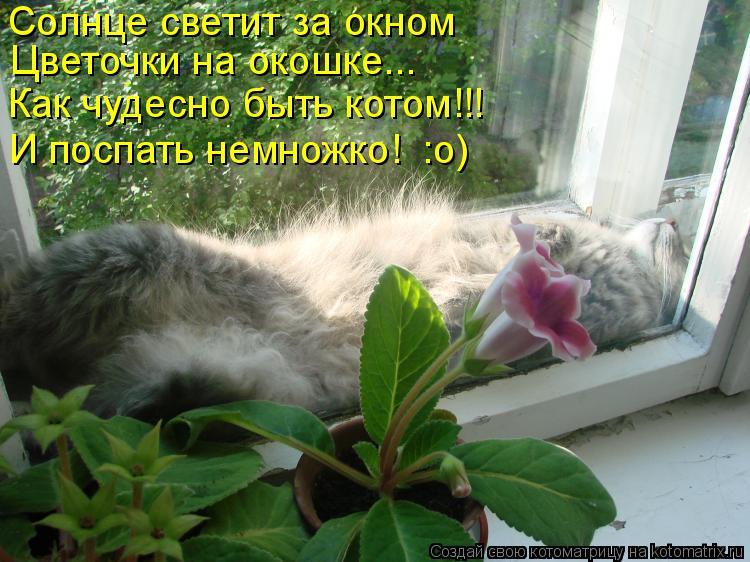 Котоматрица: Солнце светит за окном Как чудесно быть котом!!! Цветочки на окошке... И поспать немножко!  :о)
