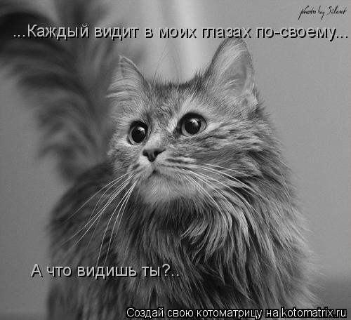 Котоматрица: ...Каждый видит в моих глазах по-своему... А что видишь ты?..