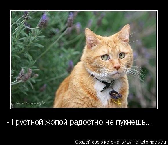 Котоматрица: - Грустной жопой радостно не пукнешь....