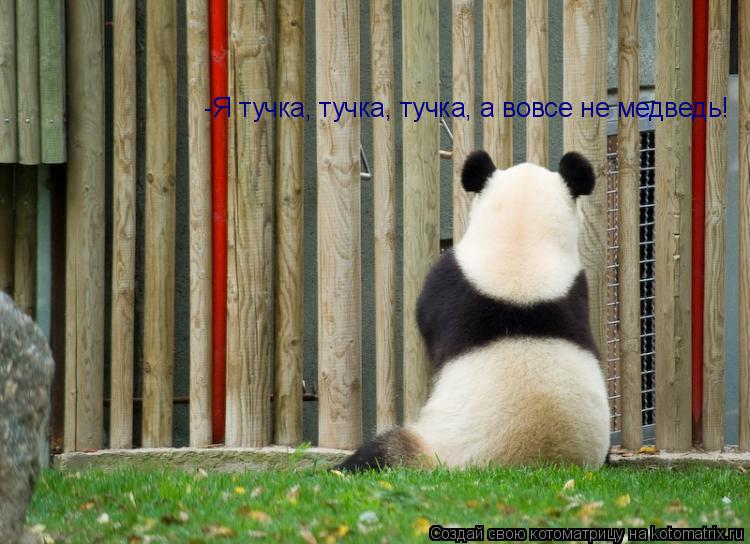 Котоматрица: -Я тучка, тучка, тучка, а вовсе не медведь!