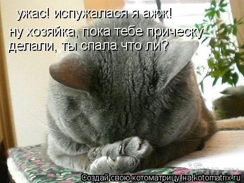 Котоматрица: ужас! испужалася я ажж! ну хозяйка, пока тебе прическу делали, ты спала что ли? ну хозяйка, пока тебе прическу делали, ты спала что ли? ну хозяй