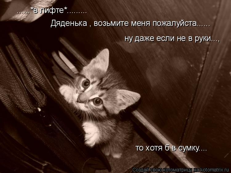 Котоматрица: ......*в лифте*......... Дяденька , возьмите меня пожалуйста...... ну даже если не в руки..., то хотя б в сумку....