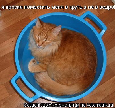 Котоматрица: я просил поместить меня в круть а не в ведро!!!