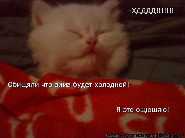 Котоматрица: -ХДДДД!!!!!!! Обищяли что зима будет холодной! Я это ощющяю!