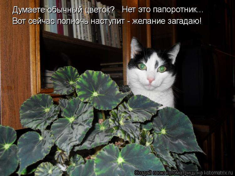 Котоматрица: Думаете обычный цветок? Нет это папоротник... Вот сейчас полночь наступит - желание загадаю!