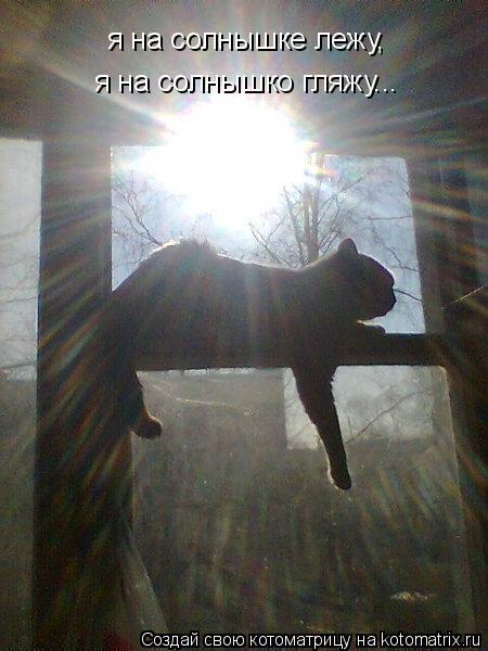 Котоматрица: я на солнышке лежу, я на солнышко гляжу...