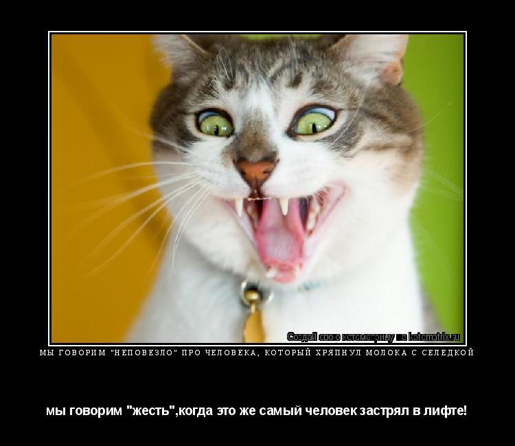 """Котоматрица: МЫ ГОВОРИМ """"НЕПОВЕЗЛО"""" ПРО ЧЕЛОВЕКА, КОТОРЫЙ ХРЯПНУЛ МОЛОКА С СЕЛЁДКОЙ мы говорим """"жесть"""",когда это же самый человек застрял в лифте!"""