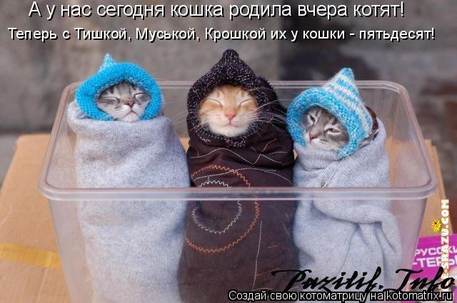 Котоматрица: А у нас сегодня кошка родила вчера котят! Теперь с Тишкой, Муськой, Крошкой их у кошки - пятьдесят!