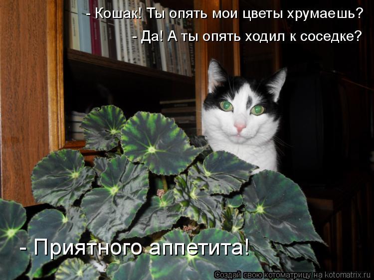 Котоматрица: - Кошак! Ты опять мои цветы хрумаешь? - Да! А ты опять ходил к соседке? - Приятного аппетита!