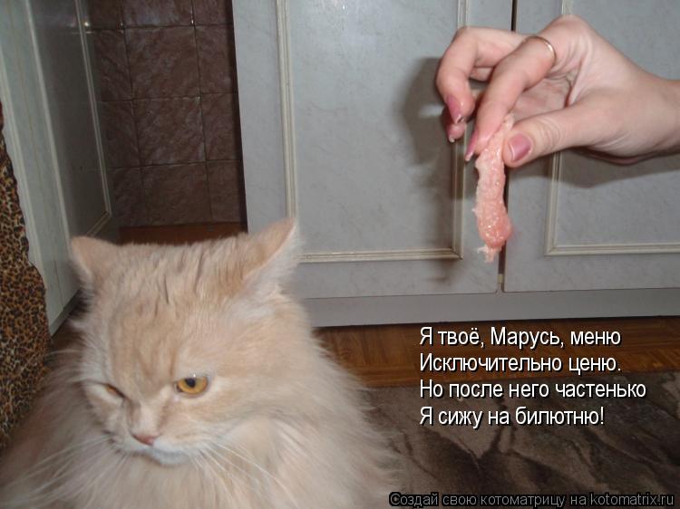 Котоматрица: Я твоё, Марусь, меню Исключительно ценю. Но после него частенько Я сижу на билютню!