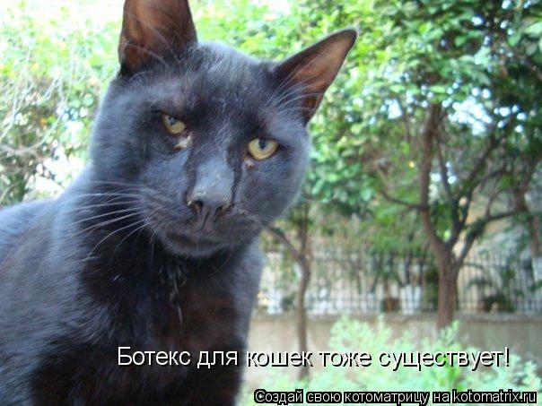 Котоматрица: Ботекс для кошек тоже существует!