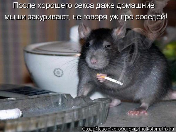 Котоматрица: После хорошего секса даже домашние мыши закуривают, не говоря уж про соседей!