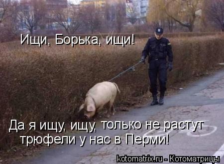 Котоматрица: Ищи, Борька, ищи! Да я ищу, ищу,  только не растут  трюфели у нас в Перми!