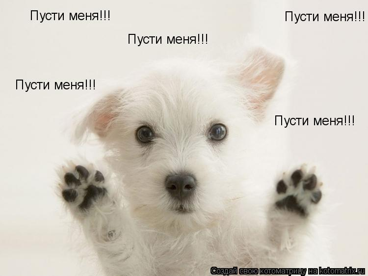 Котоматрица: Пусти меня!!! Пусти меня!!! Пусти меня!!! Пусти меня!!! Пусти меня!!!