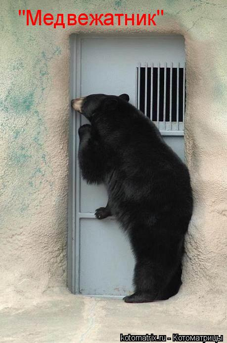 "Котоматрица: ""Медвежатник"""