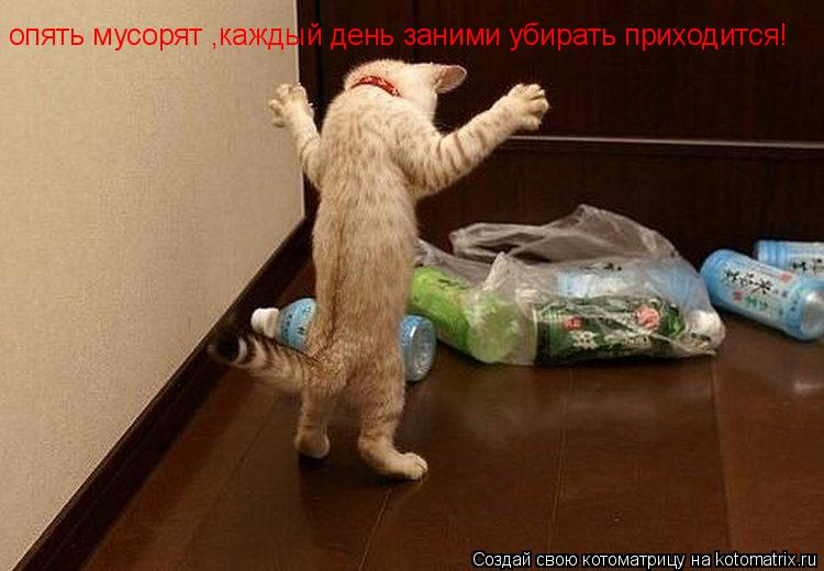 Котоматрица: опять мусорят ,каждый день заними убирать приходится!