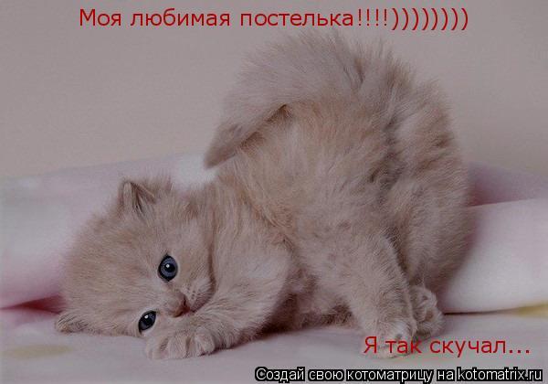 Котоматрица: Моя любимая постелька!!!!)))))))) Я так скучал...