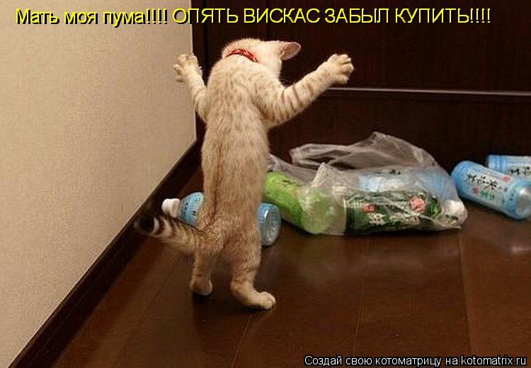 Котоматрица: Мать моя пума!!!! ОПЯТЬ ВИСКАС ЗАБЫЛ КУПИТЬ!!!! Мать моя пума!!!! ОПЯТЬ ВИСКАС ЗАБЫЛ КУПИТЬ!!!!