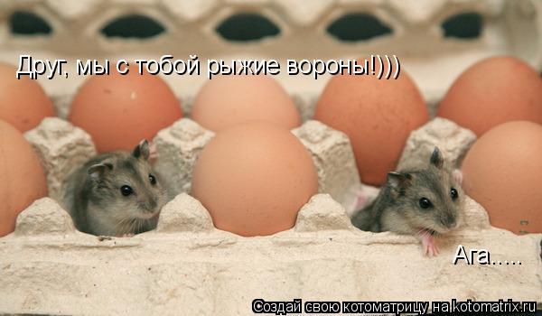 Котоматрица: Друг, мы с тобой рыжие вороны!))) Ага.....