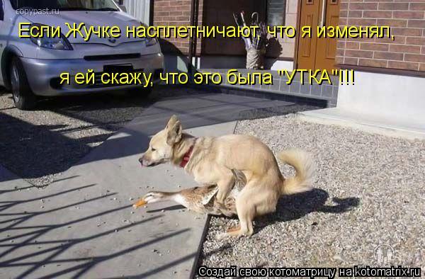 """Котоматрица: Если Жучке насплетничают, что я изменял,  я ей скажу, что это была """"УТКА""""!!!"""