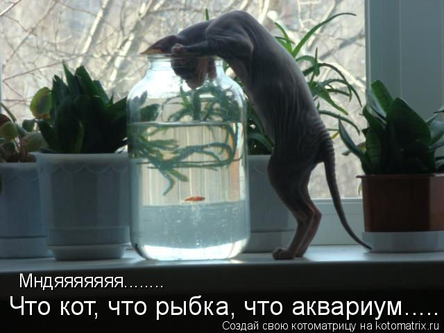Котоматрица: Мндяяяяяяя........ Что кот, что рыбка, что аквариум.....