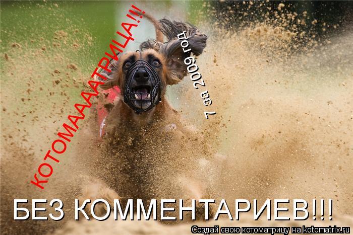 Котоматрица: КОТОМААААТРИЦА!!! 7 за 2009 год БЕЗ КОММЕНТАРИЕВ!!!