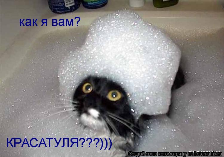 Котоматрица: как я вам?  КРАСАТУЛЯ???)))  КРАСАТУЛЯ???)))