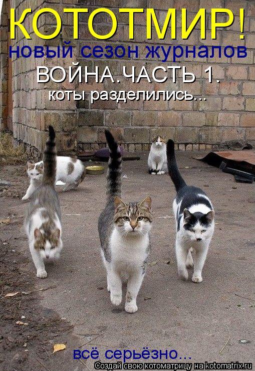 Котоматрица: КОТОТМИР! новый сезон журналов ВОЙНА.ЧАСТЬ 1. коты разделились... всё серьёзно...