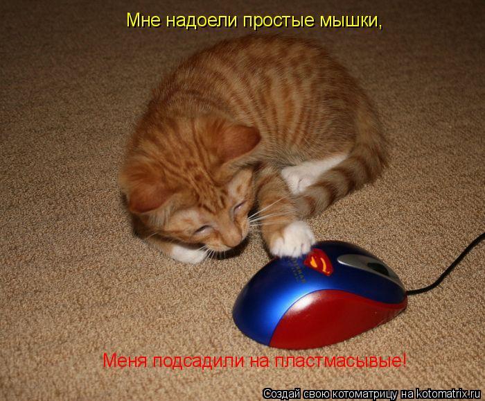 Котоматрица: Мне надоели простые мышки, Меня подсадили на пластмасывые!