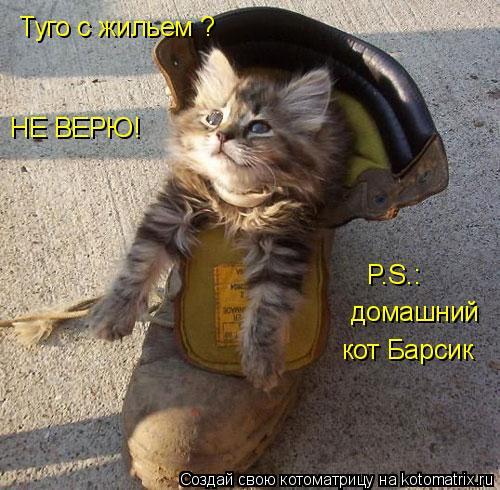 Котоматрица: Туго с жильем ? НЕ ВЕРЮ! P.S.: домашний кот Барсик