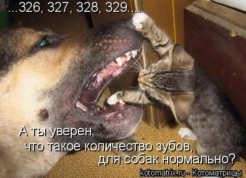 Котоматрица: ...326, 327, 328, 329.... А ты уверен,  что такое количество зубов,  для собак нормально?