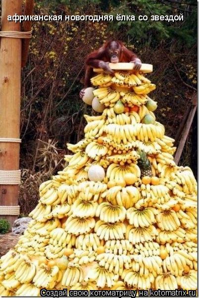 Котоматрица: африканская новогодняя ёлка со звездой