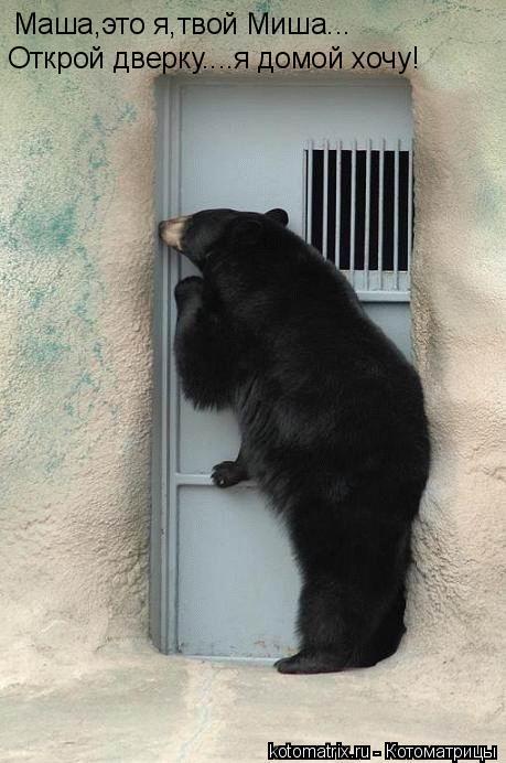 Котоматрица: Маша,это я,твой Миша... Открой дверку....я домой хочу!