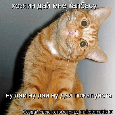 Котоматрица: хозяин дай мне калбасу  ну дай ну дай ну дай пожалуйста