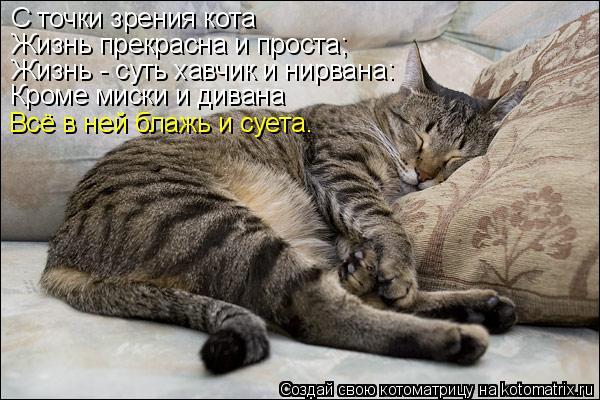 Котоматрица: С точки зрения кота Жизнь прекрасна и проста; Жизнь - суть хавчик и нирвана: Кроме миски и дивана Всё в ней блажь и суета.