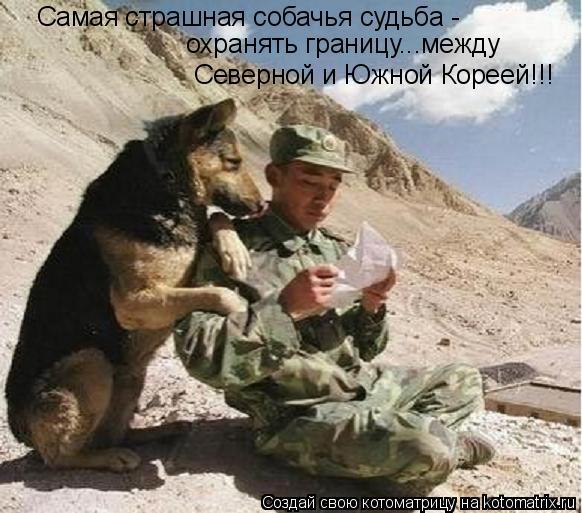 Котоматрица: Самая страшная собачья судьба -  охранять границу...между  Северной и Южной Кореей!!!