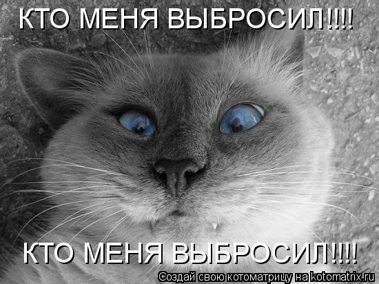 Котоматрица: КТО МЕНЯ ВЫБРОСИЛ!!!! КТО МЕНЯ ВЫБРОСИЛ!!!!