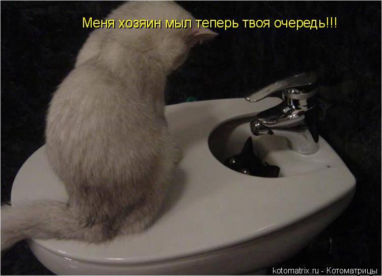 Котоматрица: Меня хозяин мыл теперь твоя очередь!!!