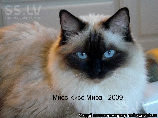 Котоматрица: Мисс-Кисс Мира - 2009