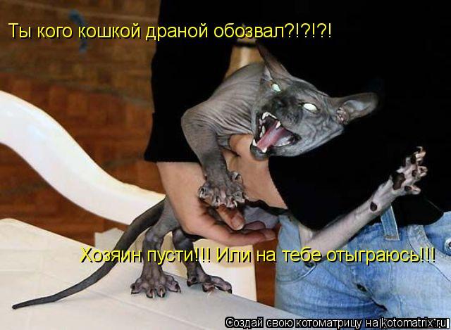 Котоматрица: Ты кого кошкой драной обозвал?!?!?! Хозяин пусти!!! Или на тебе отыграюсь!!!