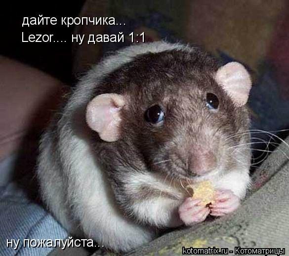 Котоматрица: дайте кропчика... ну пожалуйста... Lezor.... ну давай 1:1