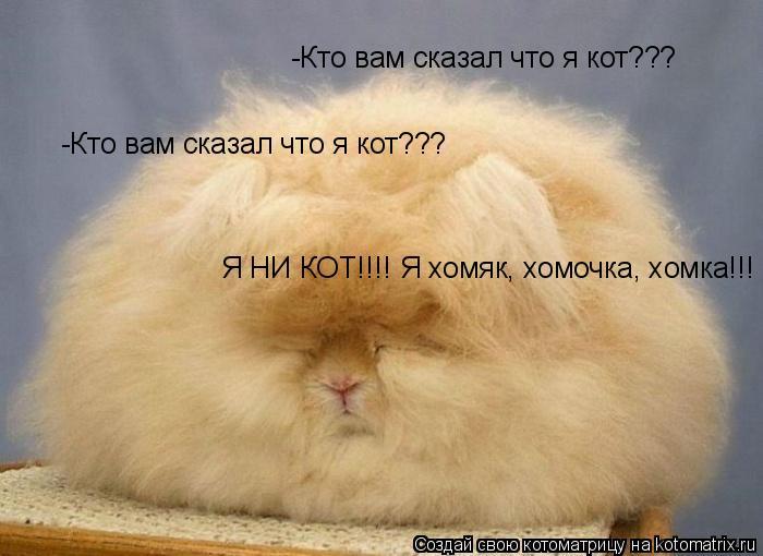 Котоматрица: -Кто вам сказал что я кот???  -Кто вам сказал что я кот???  Я НИ КОТ!!!! Я хомяк, хомочка, хомка!!! Я НИ КОТ!!!! Я хомяк, хомочка, хомка!!!