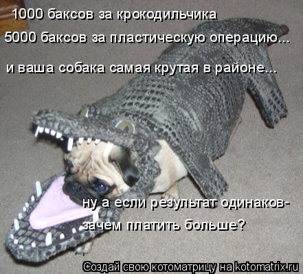 Котоматрица: 1000 баксов за крокодильчика и ваша собака самая крутая в районе... 5000 баксов за пластическую операцию... ну а если результат одинаков- зачем пл