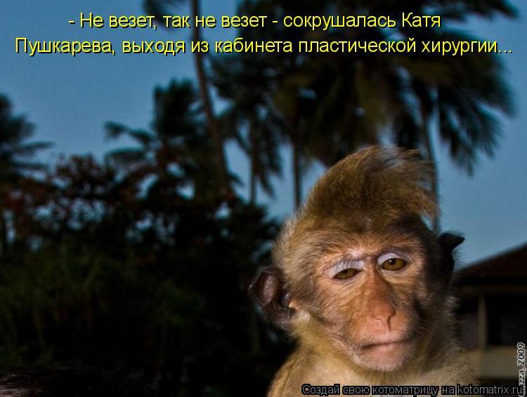 Котоматрица: - Не везет, так не везет - сокрушалась Катя Пушкарева, выходя из кабинета пластической хирургии...