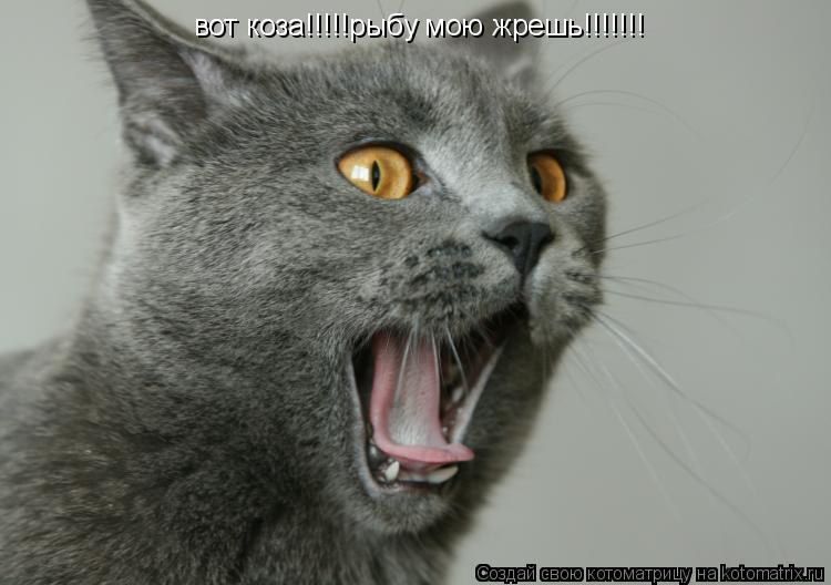 Котоматрица: вот коза!!!!!рыбу мою жрешь!!!!!!!