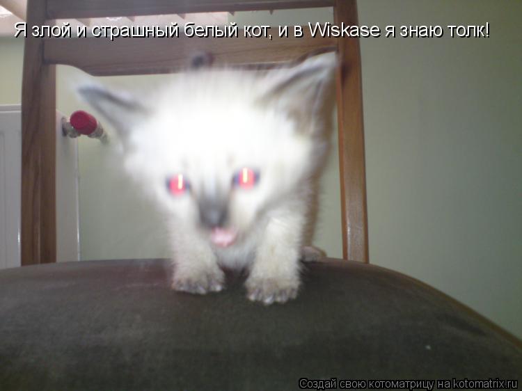 Котоматрица: Я злой и страшный белый кот, и в Wiskase я знаю толк!
